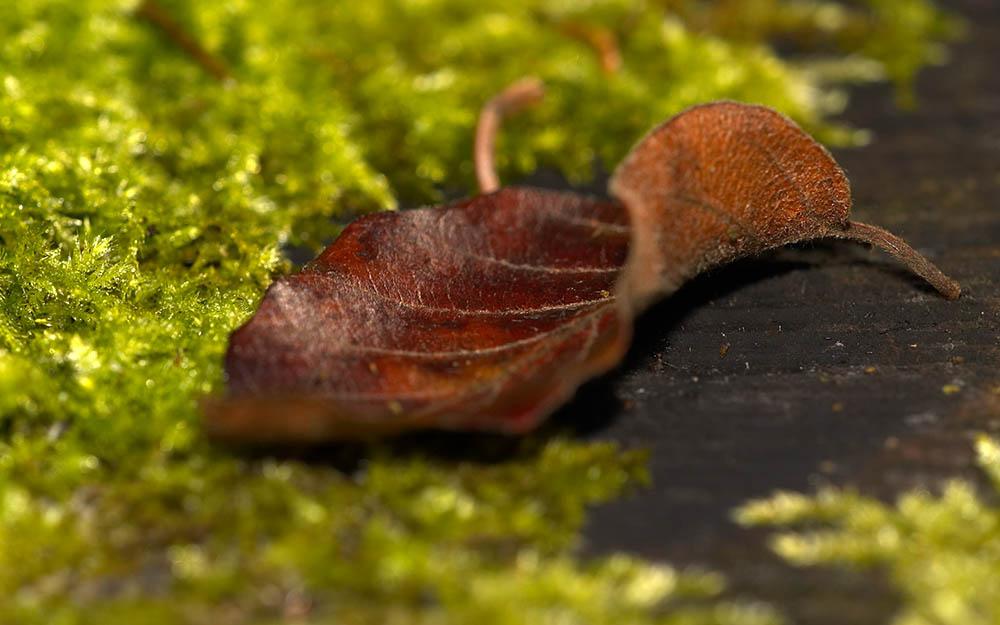 Blatt im Wald 2
