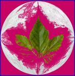 Blatt in pink