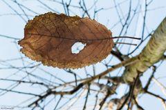 Blatt.Baum.Spiegel