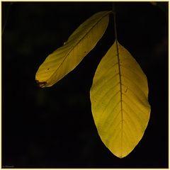 Blatt.Gold