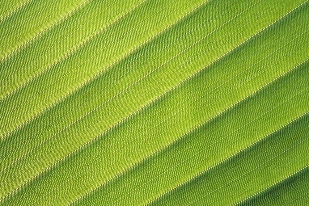 Blattgrün 1