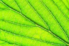 Blattgrün