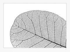 Blattstruktur -monocrome