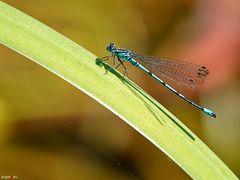 Blau auf Grün