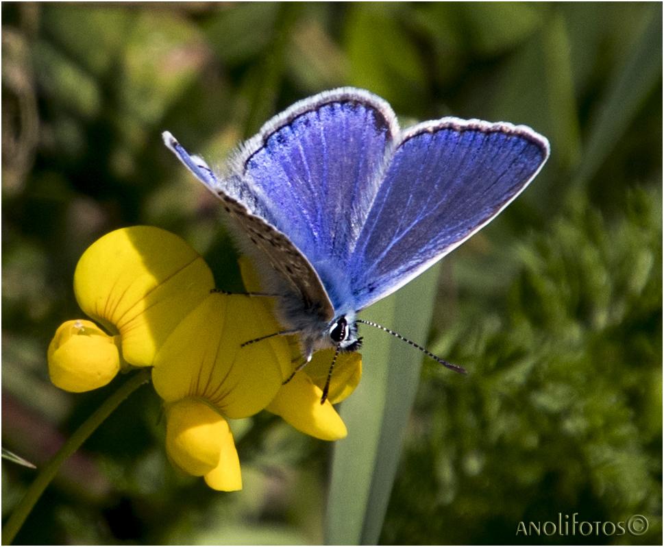 Blau, blau, blau....