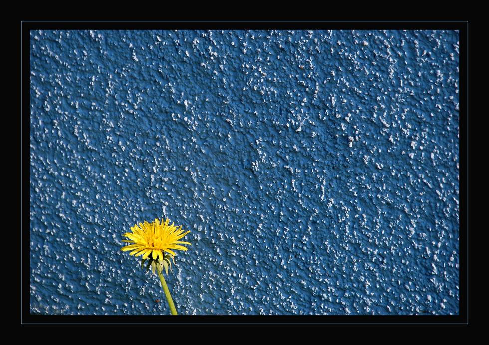 Blau * Gelb