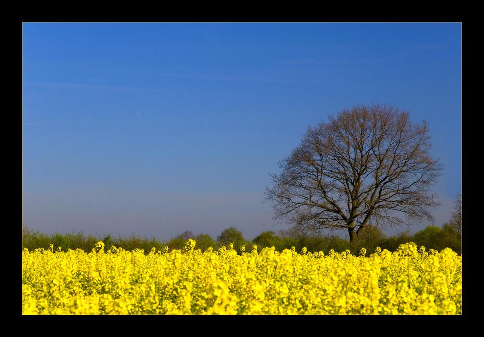 blau + gelb + Baum...