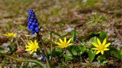 Blau & Gelb