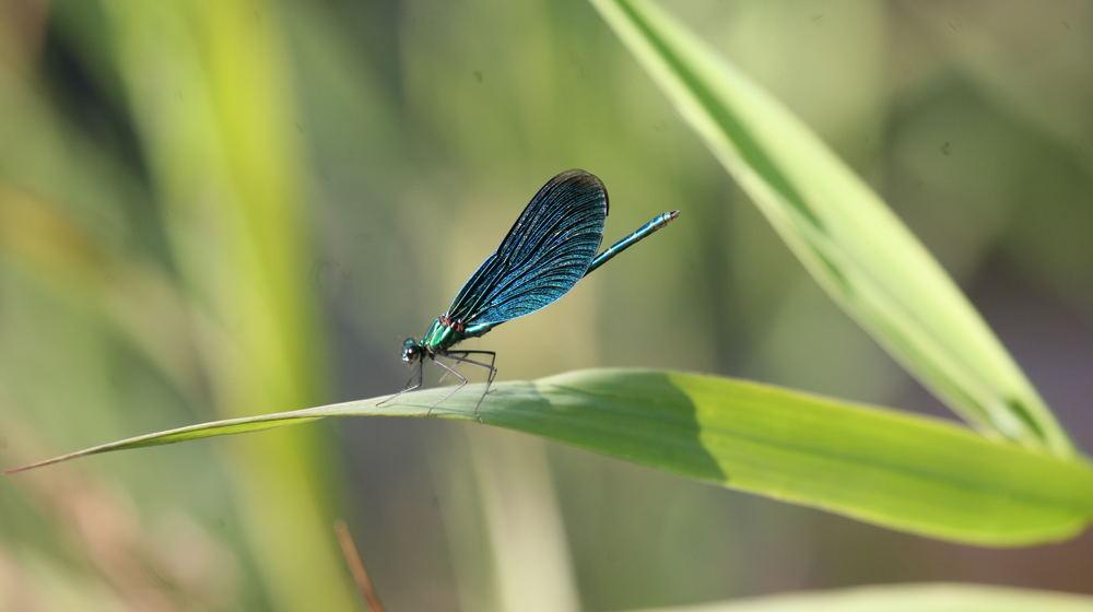 blau in der Natur: immer wieder faszinierend!