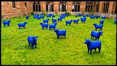 Blau - Münsterhof Basel