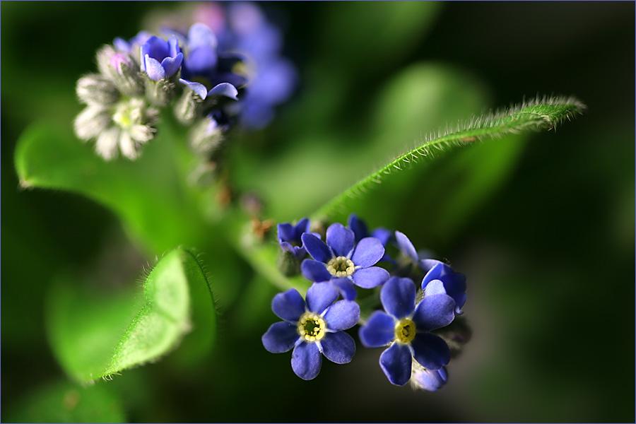 Blau = Sehnsucht