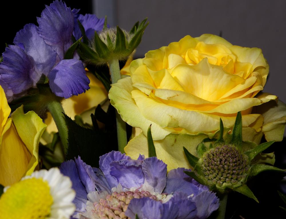 Blau und Gelb zusammen gebunden