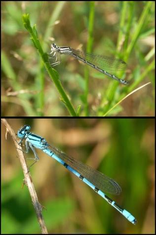 Blau und Weiß