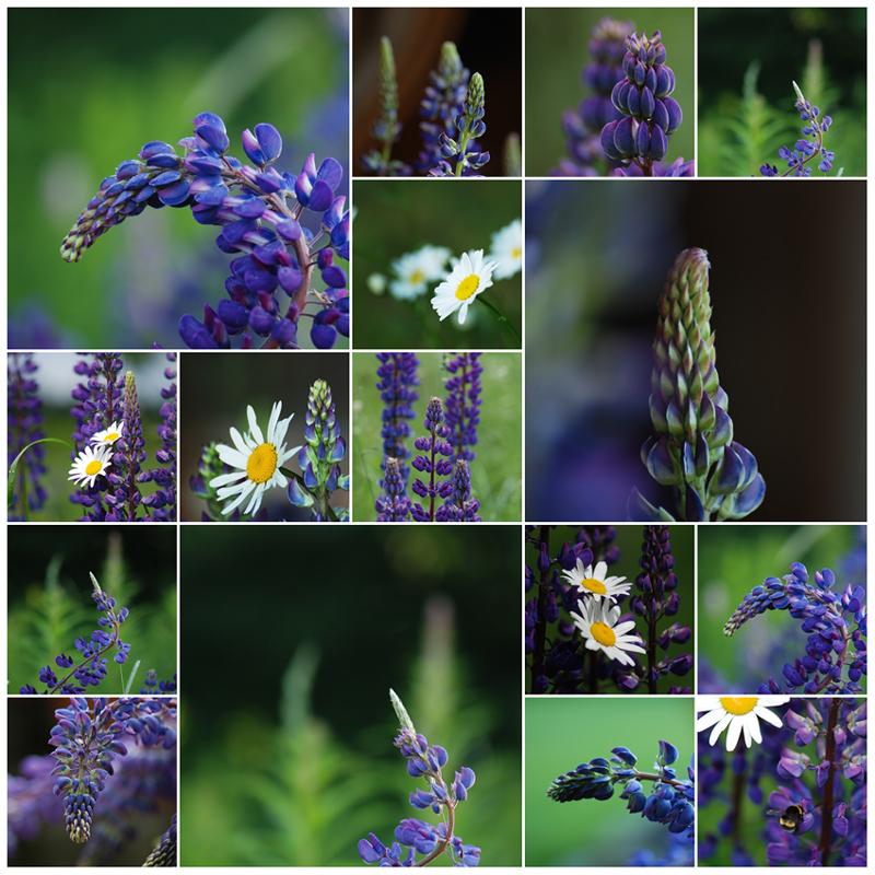 blau-violett.....