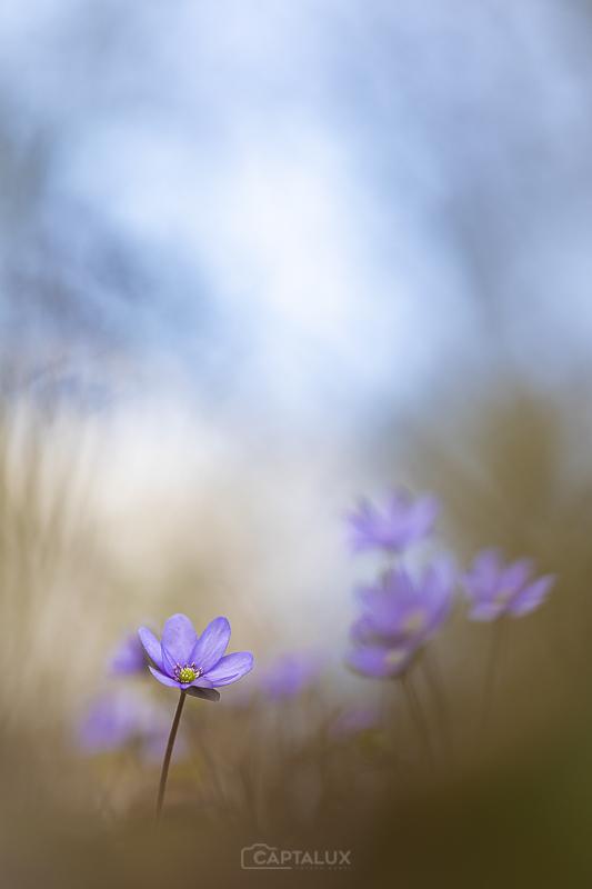 Blau-Violette Harmonie