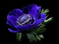Blau wie die Hoffnung ...