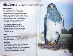 Blaubussard - Falknerei Remscheid