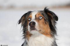 ** blaue Augen **