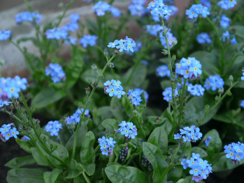 ...blaue aussichten...