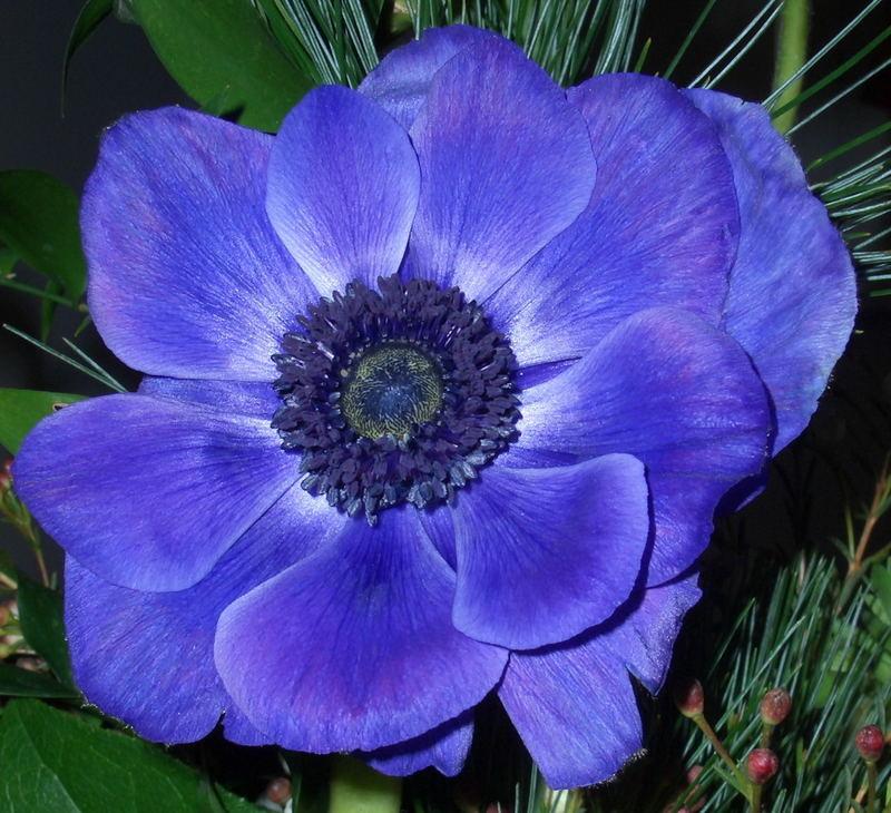 Blaue Blume 1
