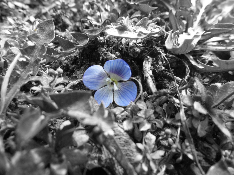 Blaue Blume...