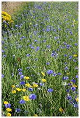 Blaue Blumen - Blue Flowers I