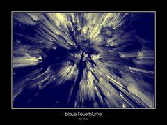blaue Feuerblume