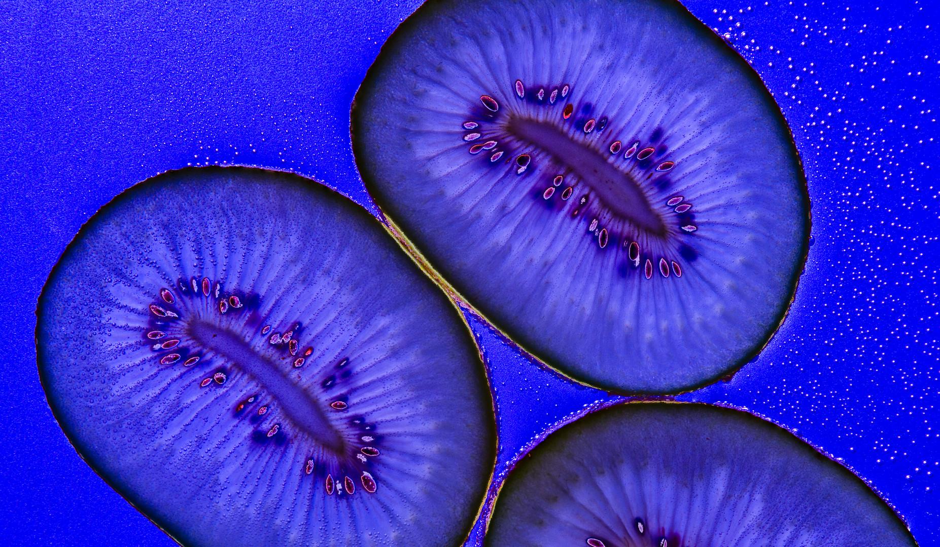 Blaue Kiwi
