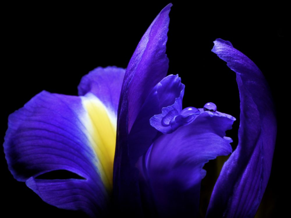 Blaue Perlmuschel ...