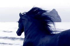 Blaue Pferde am Strand....