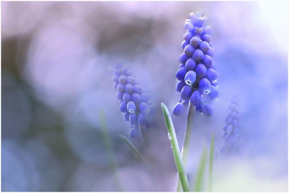 Blaue Schönheit....