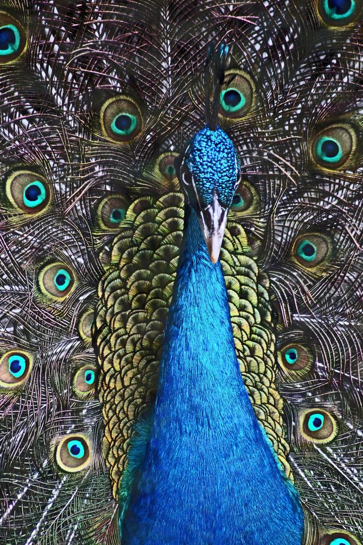 Blaue Sinfonie