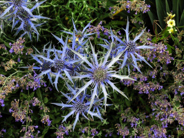 Blaue Sterne - Wunder der Natur
