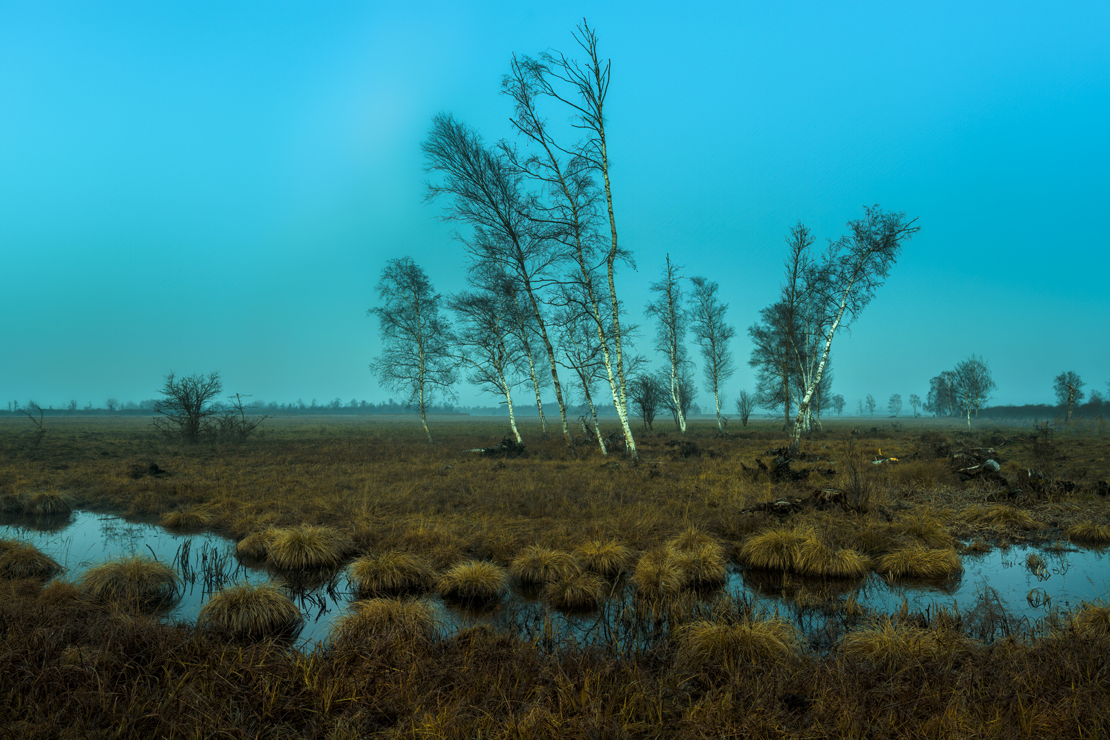 Blaue Stunde im Leipheimer Moos