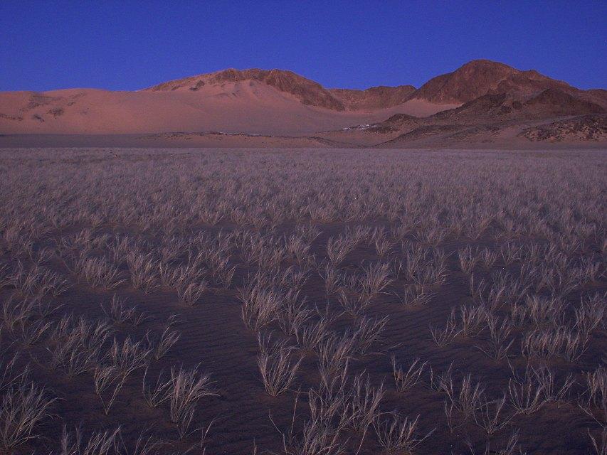 """""""Blaue Stunde"""" in den algerischen Dünen der Sahara"""