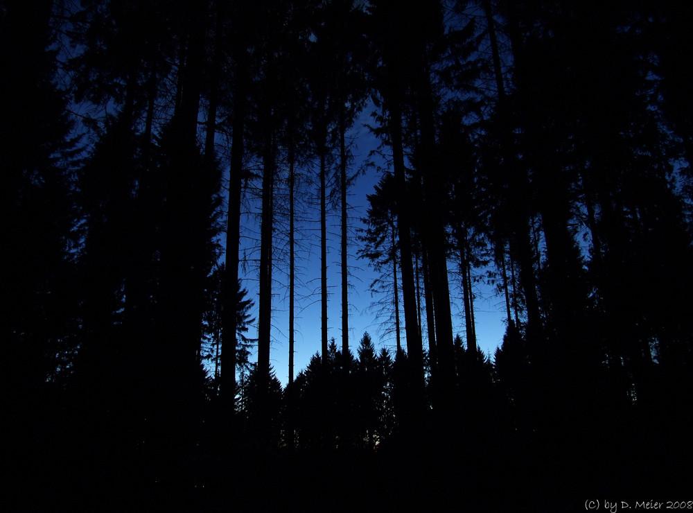 Blaue Stunde über´m Arenberger Wald