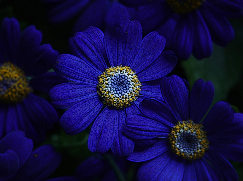 ...blaue Wunder...