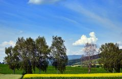 ~~~ Blauen - Blick 3: Spätfrühling / Baumsterben ~~~