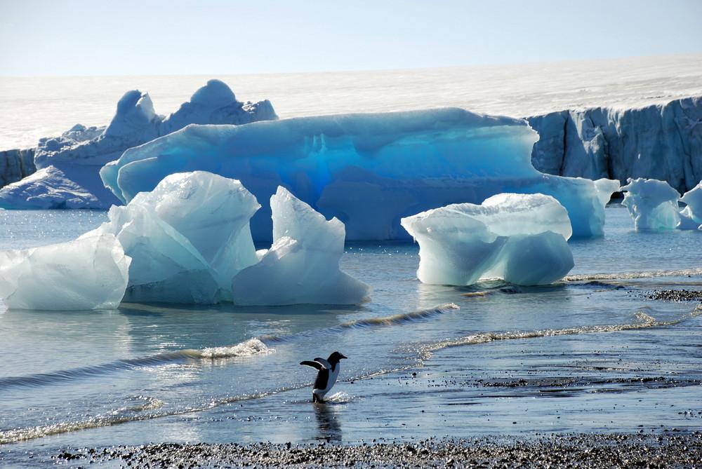 Blauer Eisberg mit Eselspinguin