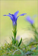 ~ Blauer Herbst ~
