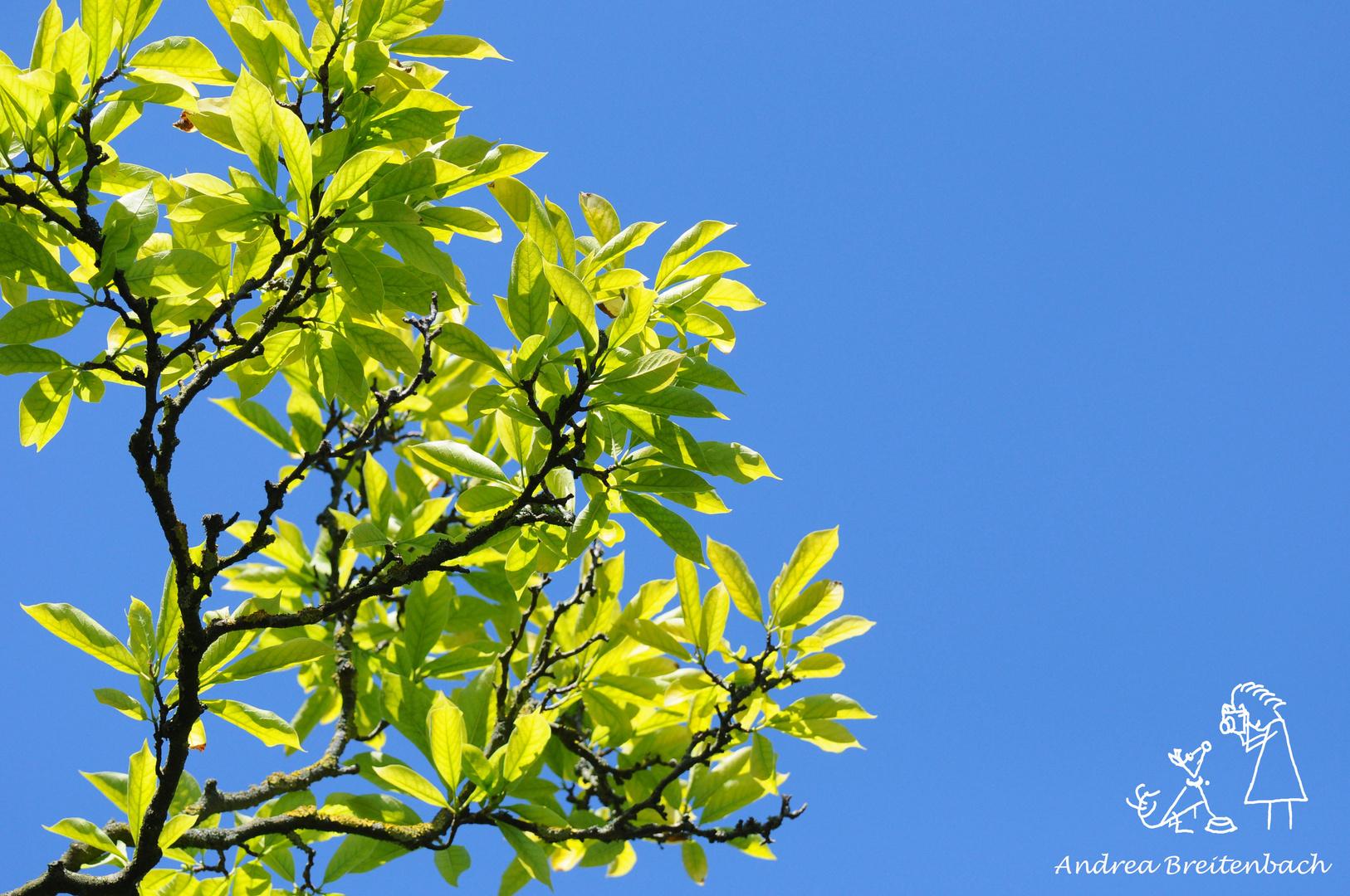 Blauer Himmel....