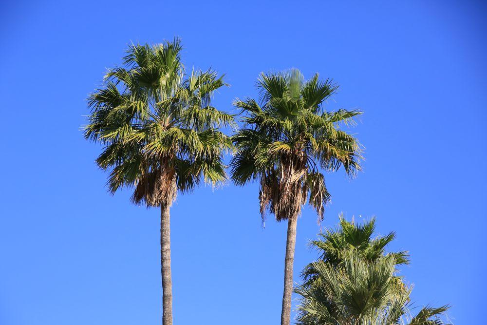 Blauer Himmel und Palmen, was braucht es mehr?