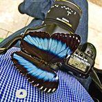 Blauer Morphofalter auf meiner 5D