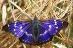 Blauer Schmetterling ???