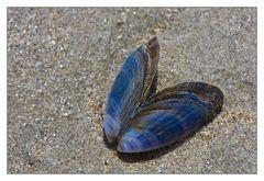 Blauer Strand-Schmetterling