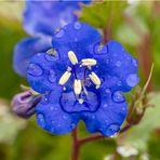 blaues Blümchen zum Spiegeltag