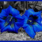 Blaues Doppel....