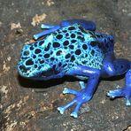 Blaues Juwel