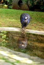 Blaues Spiegelbild