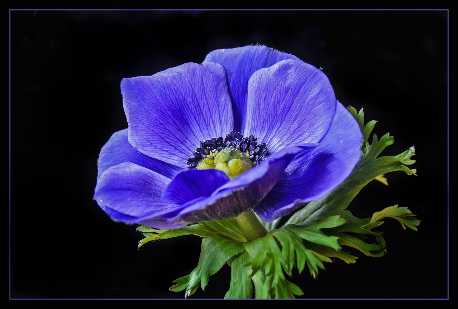 Blaues Wunderwerk der Natur